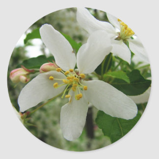 Language of Flowers White Apple Blossom Preference Round Sticker