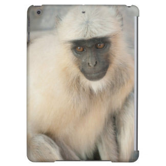 Langur Monkey, Amber Fort, Jaipur, Rajasthan