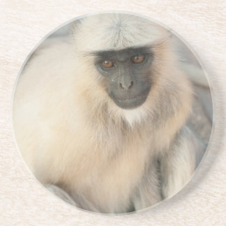 Langur Monkey, Amber Fort, Jaipur, Rajasthan Coaster