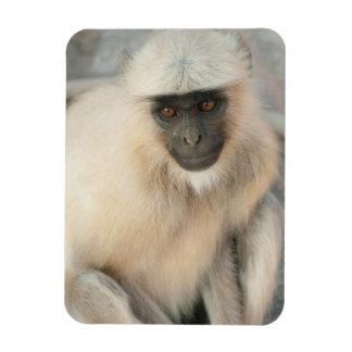Langur Monkey, Amber Fort, Jaipur, Rajasthan Rectangular Photo Magnet