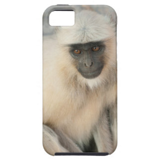 Langur Monkey, Amber Fort, Jaipur, Rajasthan iPhone 5 Cases