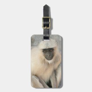 Langur Monkey, Amber Fort, Jaipur, Rajasthan Luggage Tag
