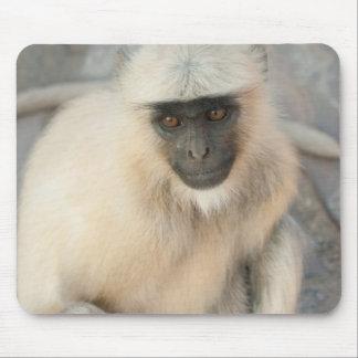 Langur Monkey, Amber Fort, Jaipur, Rajasthan Mouse Pad