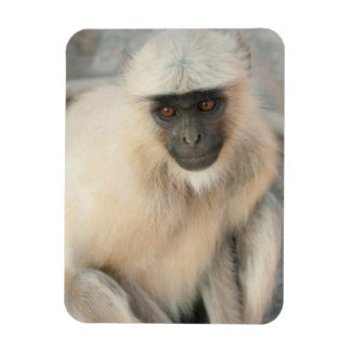 Langur Monkey, Amber Fort, Jaipur, Rajasthan Flexible Magnet