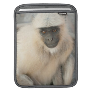 Langur Monkey, Amber Fort, Jaipur, Rajasthan Sleeves For iPads