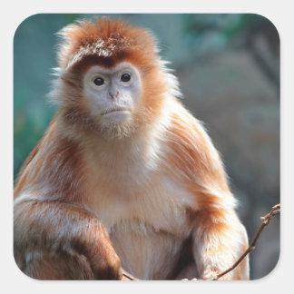 Langur Monkey Wildlife Animal Photo Square Sticker