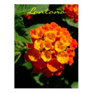 Lantana flower postcard