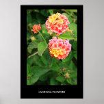 Lantana Flowers Poster,Print Poster