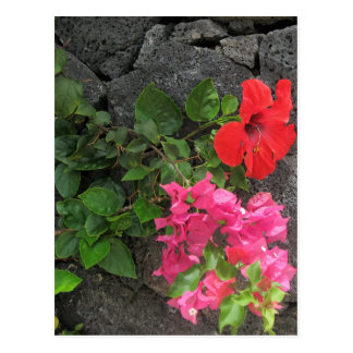 Lanzarote Lava Rock with Flowers Postcard