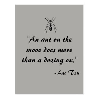 Lao Tzu Ant Quote Postcard