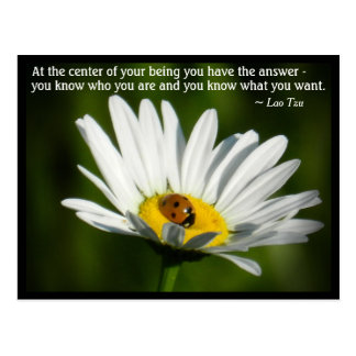 Lao Tzu Quote Ladybird Daisy Inspiring Motivation Postcard