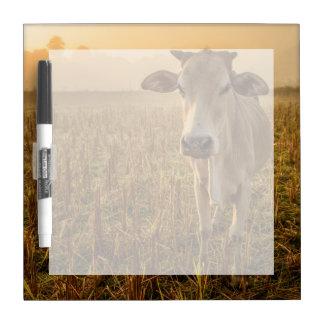 Laos, Vang Vieng. Cow at sunrise Dry Erase Board