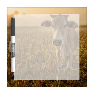 Laos, Vang Vieng. Cow at sunrise Dry Erase Boards