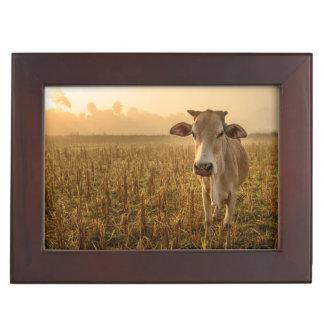 Laos, Vang Vieng. Cow at sunrise Keepsake Box