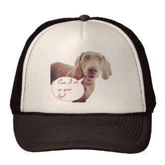 Lap Dog Cap