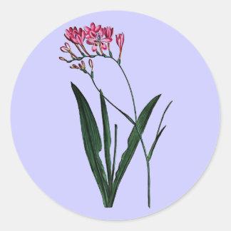 Lapeyrousia Juncea Round Sticker