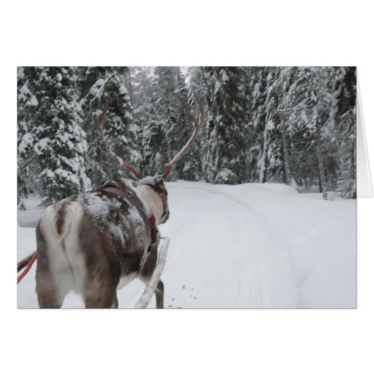 Lapland Reindeer Christmas Card Photo Card