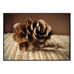 Larch Cone ATC Pack Of Chubby Business Cards