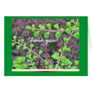 Larch tree bonsai Thank You card