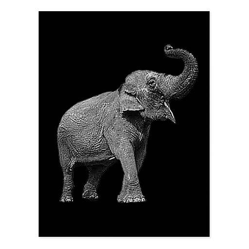 LARGE ASIAN ELEPHANT - INDIAN ELEPHANT POST CARD