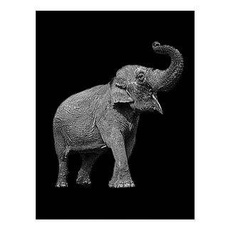 LARGE ASIAN ELEPHANT - INDIAN ELEPHANT POSTCARD