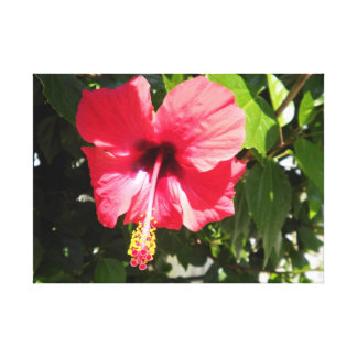 Large Beautiful Canvas Greek Grecian Pink Flower