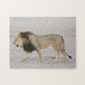 Large Black Maned Lion (Panthera Leo) Walks 2 Jigsaw Puzzle