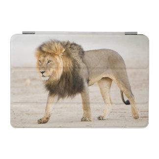 Large Black Maned Lion (Panthera Leo) Walks iPad Mini Cover