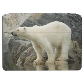 Large boar along a rocky coast in summer iPad air cover