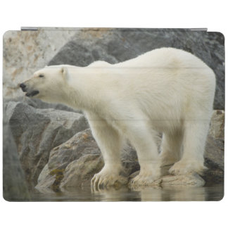 Large boar along a rocky coast in summer iPad cover