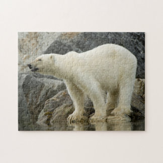 Large boar along a rocky coast in summer jigsaw puzzle