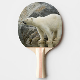 Large boar along a rocky coast in summer ping pong paddle