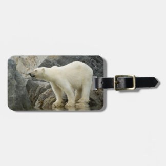 Large boar along a rocky coast in summer tag for luggage