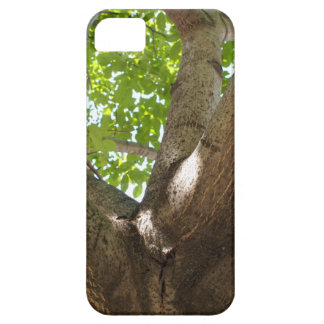 Large branches walnut textured bark in the foregro iPhone 5 cover