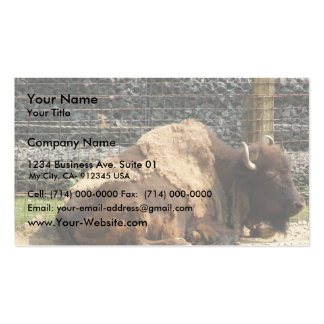 Large Brown Bison At Rest In Zoo America, Hershey, Business Cards