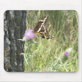 Large Butterfly On Thistle Flower Mousepad