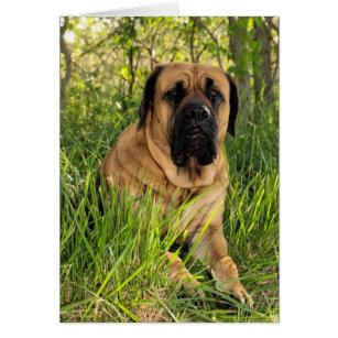 Mastiff birthday cards invitations zazzle large english mastiff dog birthday wishes card bookmarktalkfo Gallery