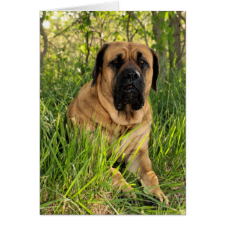 Large English Mastiff Dog - birthday wishes Card