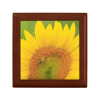 Large field of sunflowers near Moses Lake, WA 1 Gift Box