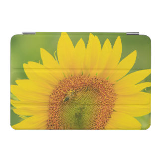 Large field of sunflowers near Moses Lake, WA 1 iPad Mini Cover
