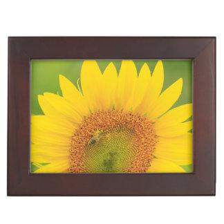 Large field of sunflowers near Moses Lake, WA 1 Keepsake Box