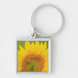 Large field of sunflowers near Moses Lake, WA 1 Key Ring