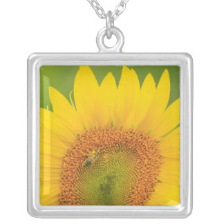 Large field of sunflowers near Moses Lake, WA 1 Silver Plated Necklace