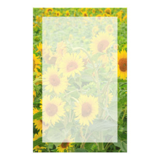 Large field of sunflowers near Moses Lake, WA 2 Customised Stationery
