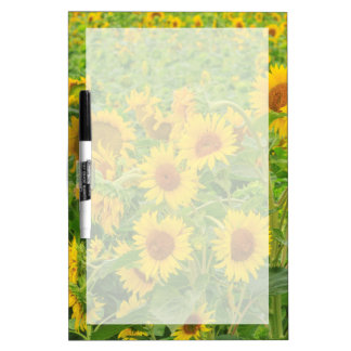 Large field of sunflowers near Moses Lake, WA 2 Dry Erase Board