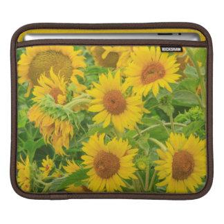 Large field of sunflowers near Moses Lake, WA 2 iPad Sleeve