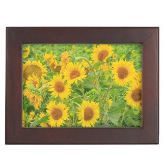 Large field of sunflowers near Moses Lake, WA 2 Keepsake Box