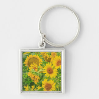 Large field of sunflowers near Moses Lake, WA 2 Key Ring