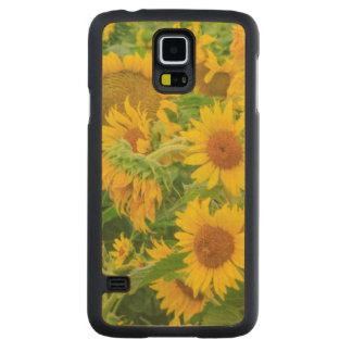 Large field of sunflowers near Moses Lake, WA 2 Maple Galaxy S5 Slim Case