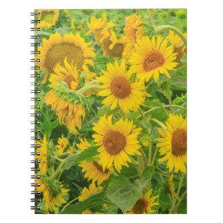 Large field of sunflowers near Moses Lake, WA 2 Notebook